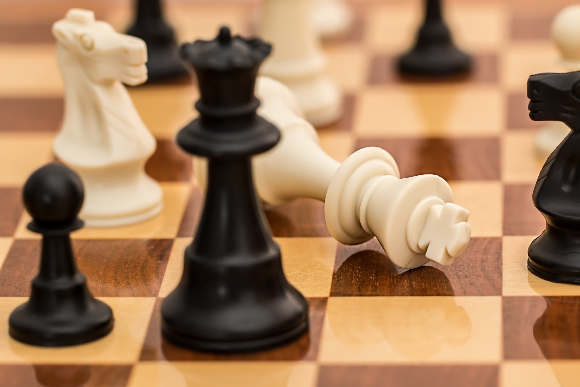 close in view of chess board. black queen standing next to tipped over white king